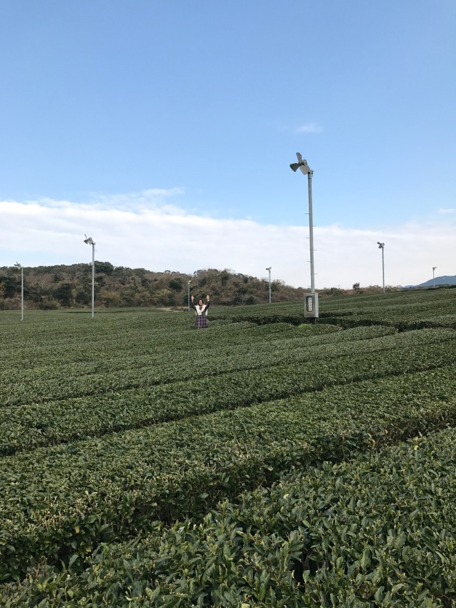 Tea plantation!